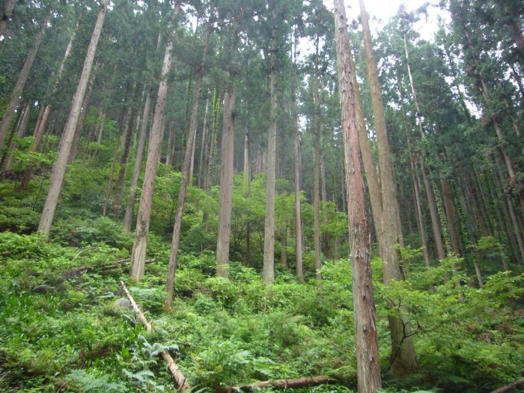 ワイズ 建築 西川材 森林 杉 桧